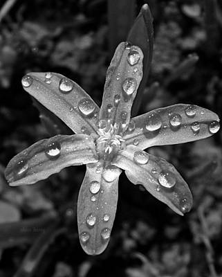 Genus Photograph - Wet Glory Of The Snow by Chris Berry