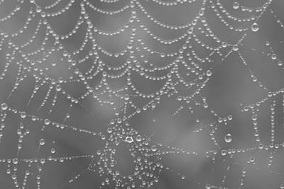Wet Web Print by Kimberly Oegerle
