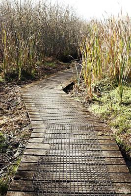 Wetland Photograph - Wetland Walk by Les Cunliffe