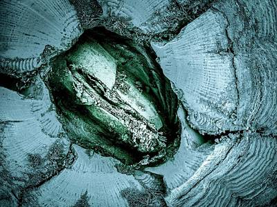 Crustacea Photograph - Whale Barnacle by Petr Jan Juracka