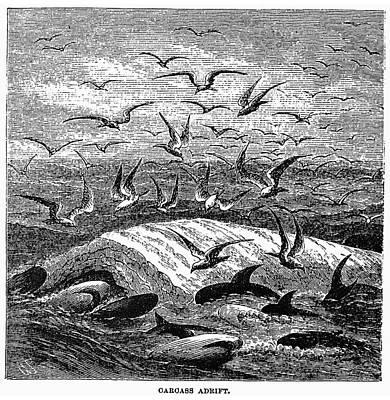 Adrift Painting - Whale Carcass Adrift, 1874 by Granger