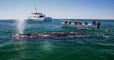 Guerrero Negro Photograph - Whale Watch by Doug Gould