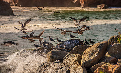 Whalers Cove Birds Print by Mike Penney