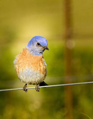 Bird On A Wire Print by Jean Noren