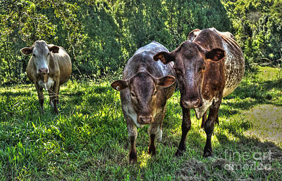 Genus Photograph - What You Looking At? by Kaye Menner