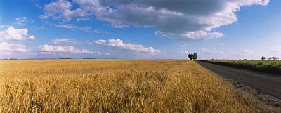 Wheat Crop In A Field, North Dakota, Usa Print by Panoramic Images