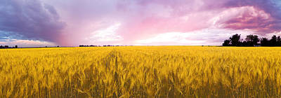 Quebec Photograph - Wheat Crop In A Field by Panoramic Images