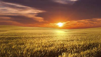 Corn Field Photograph - Wheat Field by Aged Pixel