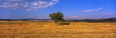 Wheat Field Central Anatolia Turkey Print by Panoramic Images