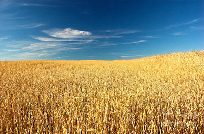 Feed Photograph - Wheat Field by Michal Bednarek