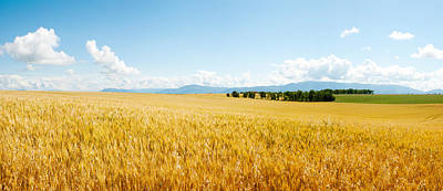 Provence Photograph - Wheat Field Near D8, Brunet, Plateau De by Panoramic Images