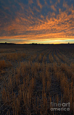 Wheat Stubble Sunset Print by Mike  Dawson