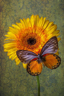 Gerbera Daisy Photograph - When Butterflies Dream by Garry Gay