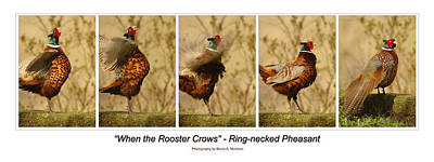 Pheasant Photograph - When The Rooster Crows by Bruce Morrison