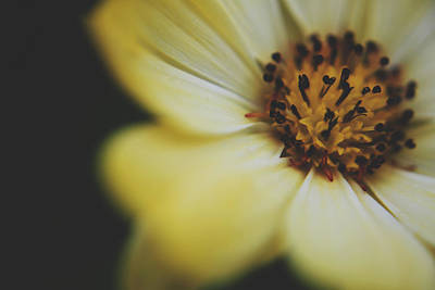 Macro Floral Photograph - When You Love Somebody by Laurie Search
