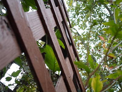 Photograph - Where The Fence Crosses by Jenna Mengersen