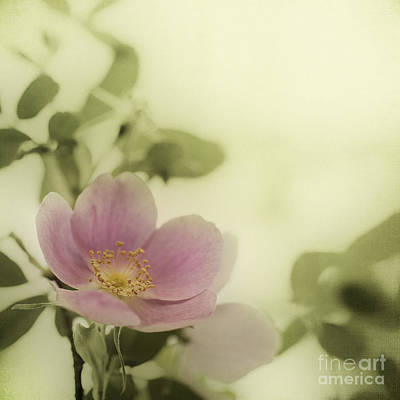 Where The Wild Roses Grow Print by Priska Wettstein