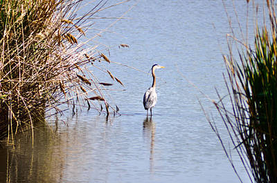 Blue Herron Photograph - Where The Wild Things Are by Bill Cannon