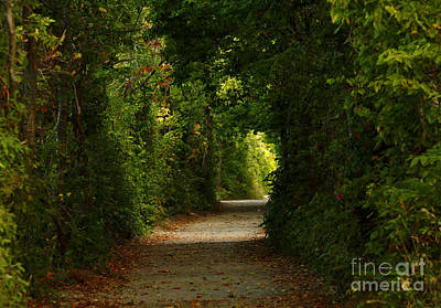 Wherever The Path Leads Print by Inspired Nature Photography Fine Art Photography