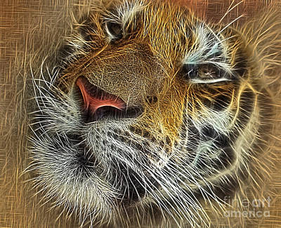 Whiskers Of The Tiger Print by Kaye Menner