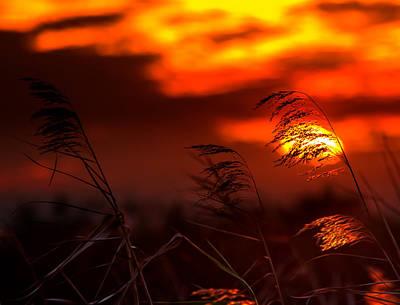 Beauty Mark Photograph - Whispering Sunset by Mark Andrew Thomas