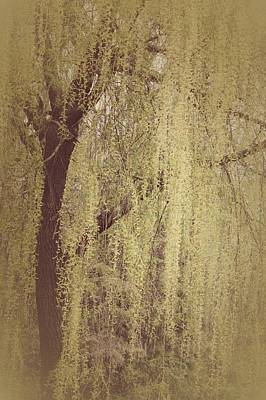 Unique Photograph - Whispering Tree by  The Art Of Marilyn Ridoutt-Greene