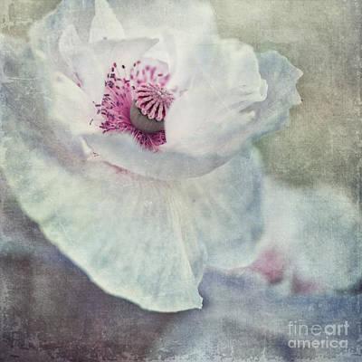 Pistil Photograph - White And Pink by Priska Wettstein