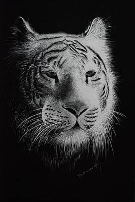 Joy Dinardo Bradley Dinardo Designs Painting - White Bengal Tiger by Joy Bradley