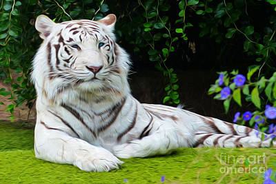 Photograph - White Bengal Tiger  by Steven Peters