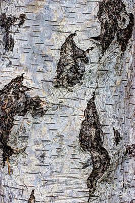 Birch Bark Photograph - White Birch Abstract  by Heidi Smith