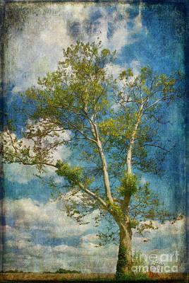 Digital Art - White Birch In May by Lois Bryan