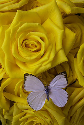Yellow Butterfly Photograph - White Butterfly Resting by Garry Gay
