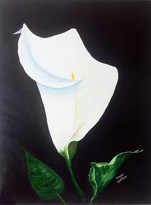 White Calla Lily Print by Faye Giblin