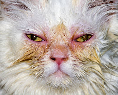 Scary White Cat Print by Bob Slitzan