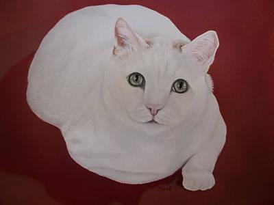 Animal Shelter Painting - White Cat by Zina Stromberg