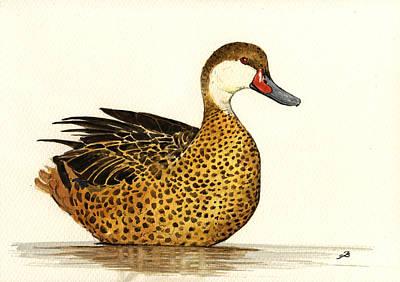 White Cheeked Pintail Print by Juan  Bosco
