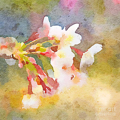 White Cherry Blossoms Digital Watercolor Painting 1 Print by Beverly Claire Kaiya