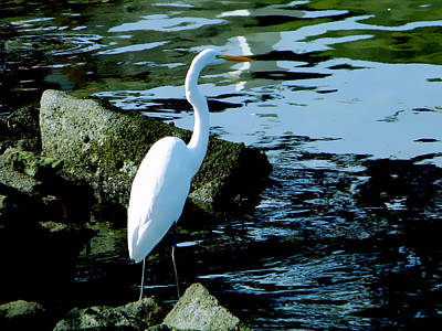 Wings Photograph - White Crane by Coconut Lime Design