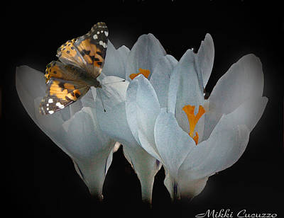White Crocus With Monarch Butterfly Print by Mikki Cucuzzo