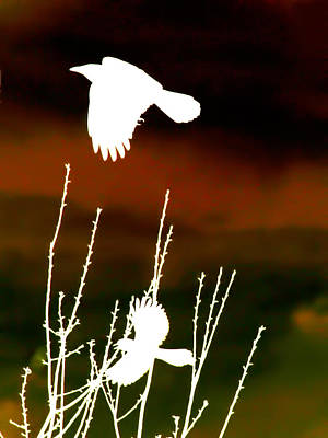 Bluejay Digital Art - White Crow And The Bluejay by Lesa Fine