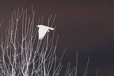 Crows Photograph - Crow White Crow Black Sky by Lesa Fine