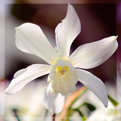 Copy Mixed Media - White Daffodil by Toppart Sweden