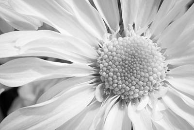 Flower Abstract Photograph - White Daisy by Adam Romanowicz
