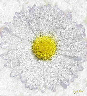 Wild Flowers Mixed Media - White Daisy On White by Jon Neidert