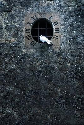 White Dove Print by Joana Kruse