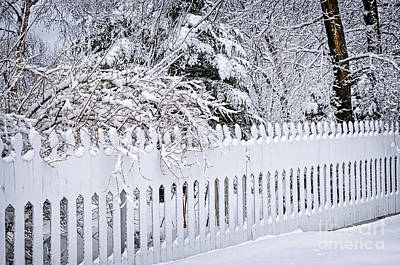 White Fence With Winter Trees Print by Elena Elisseeva