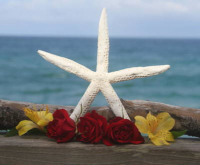 Wood Photograph - White Finger Starfish And Flowers by Cathy Lindsey