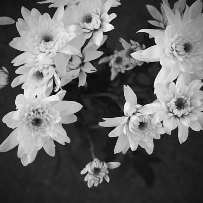 Mums Mixed Media - White Flowers- Black And White Photography by Linda Woods