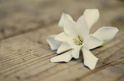 White Gardenia Print by Heather Applegate