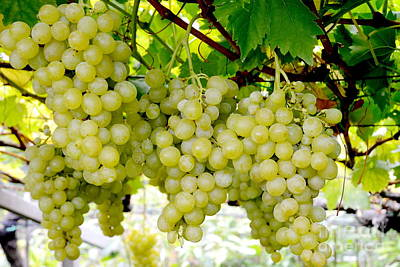Bunch Of Grapes Photograph - White Grapes by Karin Stein